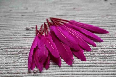 Feathers fuchsia
