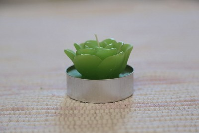 Succulent candle